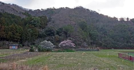 Nanzanhokarimg0030
