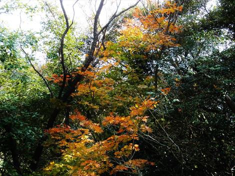 Akihukasi005_2